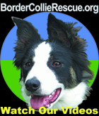 Link to a page with Videos about the work of Border Collie Rescue