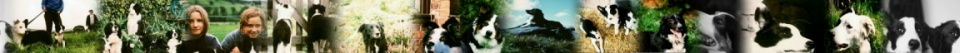 page identifier logo image of Border Collie Rescue dogs
